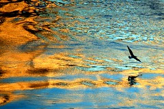 Jonathan and His Friends #73 (stedef) Tags: life italy rome roma reflection water river italia seagull fiume tevere acqua gabbiano riflesso fiatlux naturesfinest pon