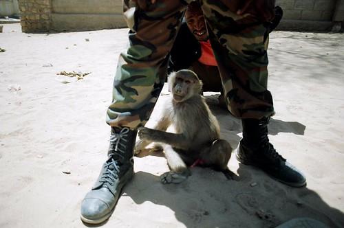 secure monkey