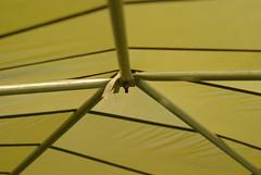 Joint (Luke Mahan) Tags: portland or dome geodesic parachute geodesicdome artistery theartistery lukemahan kaitlintrott