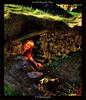 Cat-Art doing her Thing! (Irishphotographer) Tags: ireland art history archaeology landscape interesting ancient searchthebest colorfull eire hills explore stunning celtic sureal hdr outofthisworld pictureperfect dolmen irishart aficionados kinkade dolman supershot 5photosaday flickrsbest beautifulireland hdrunlimited top20ireland abigfave irishphotographer anawesomeshot anawsomeshot colorphotoaward besthdr flickrdiamond theunforgettablepictures imagesofireland overtheexcellence theperfectphotographer goldstaraward picturesofireland cleverandcreativecaptures sheildofexcelence pentaxk20d damniwishidtakenthat flickrlovers goldenvisions kimshatwell irishphotographerkimshatwellireland passionateinspirations irishcalender09 calendarofireland breathtakingphotosofnature beautifulirelandcalander wwwdoublevisionimageswebscom