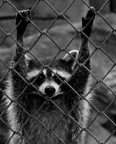 prisoner by Slavin@.