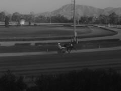 22lug 022 (stellagialla) Tags: corse palermo cavalli ippodromo calesse