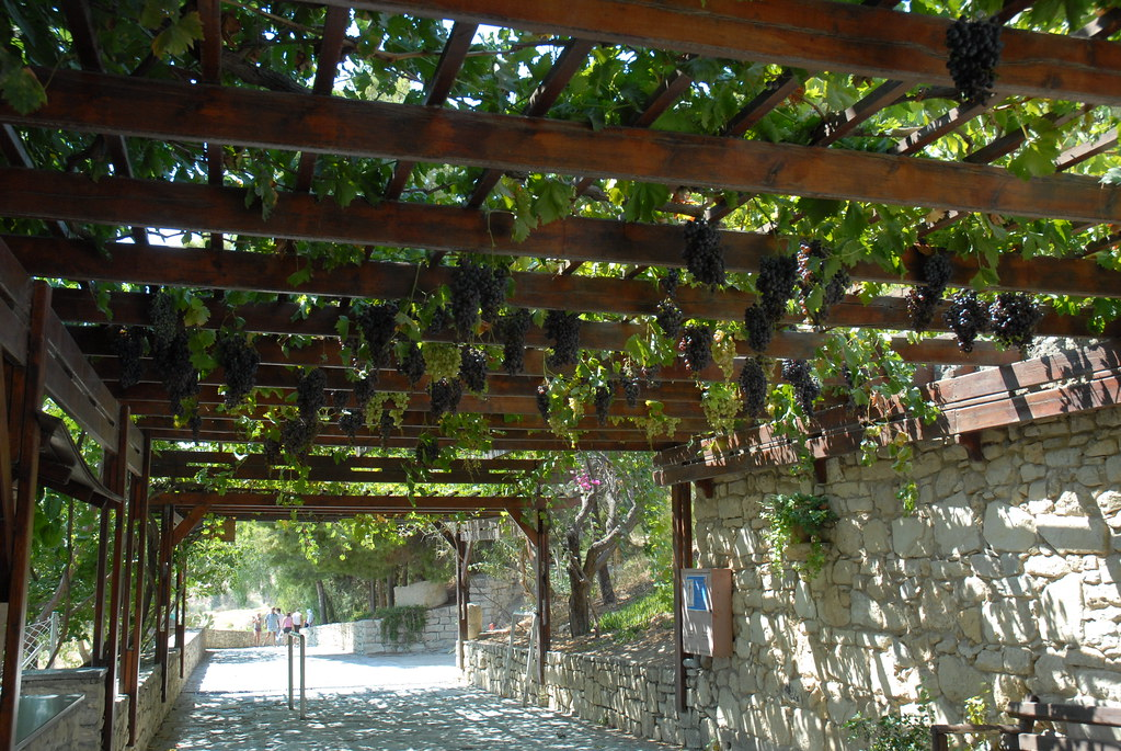 The Worlds Best Photos of pergolato and vineyard - Flickr Hive Mind