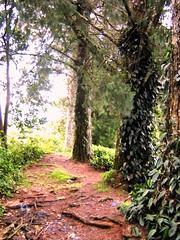 Cool Hideout (prmn_2002) Tags: trees path malaysia cameronhighlands sgpalas