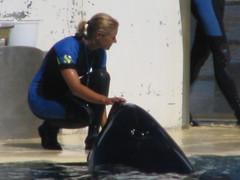 Photo 337 (valentinwhale) Tags: kim orca valentin killerwhale marineland freya wiki orque orques paulard inouk sharkan