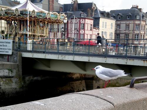 Honfleur Carousel and Seagull