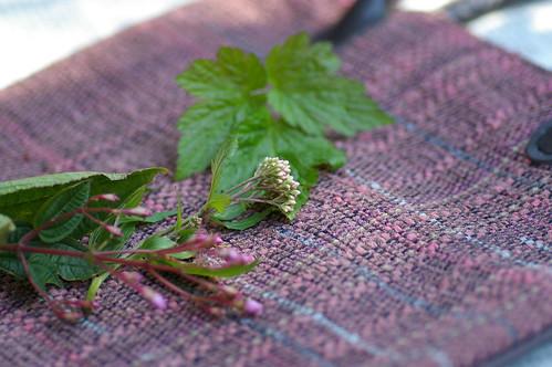 裂織のバッグと秋の植物3種