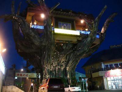 Gajumaru tree restaurant