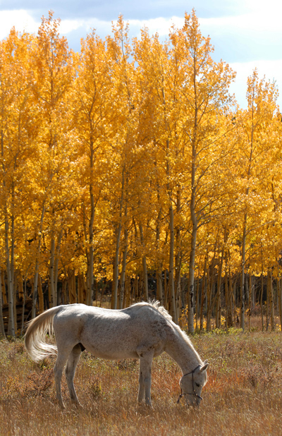 20081002_ASPENS_FALL_COLOR_HORSE