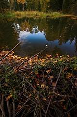 Sticks and stones (aylmerqc) Tags: autumn fall water leaves creek reflections pond quebec dam logs beaver fourseasons gatineau 4seasons aylmerqc