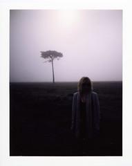 Tree With Bird Foreground (tommy forbes) Tags: tree bird fog foreground karenthenthrewaproperstropbecausehershoesgotalittlebitwet boofuckinghoobitch idontmeanthat andifyoureadthisimsorrybaby