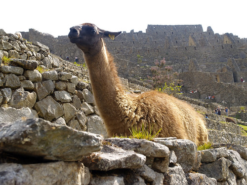2955612187 8a8a63dccc Honeymoon Photos   Part 4, Machu Picchu