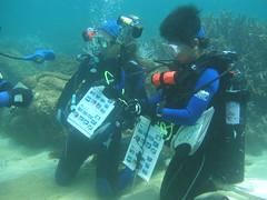 海底珊瑚體檢