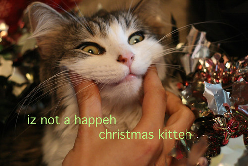 christmas lol cat
