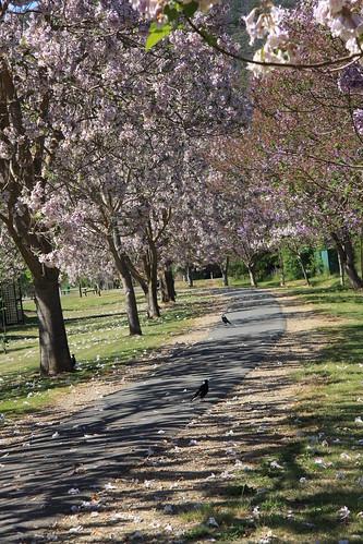 The Rail Trail Bright Victoria