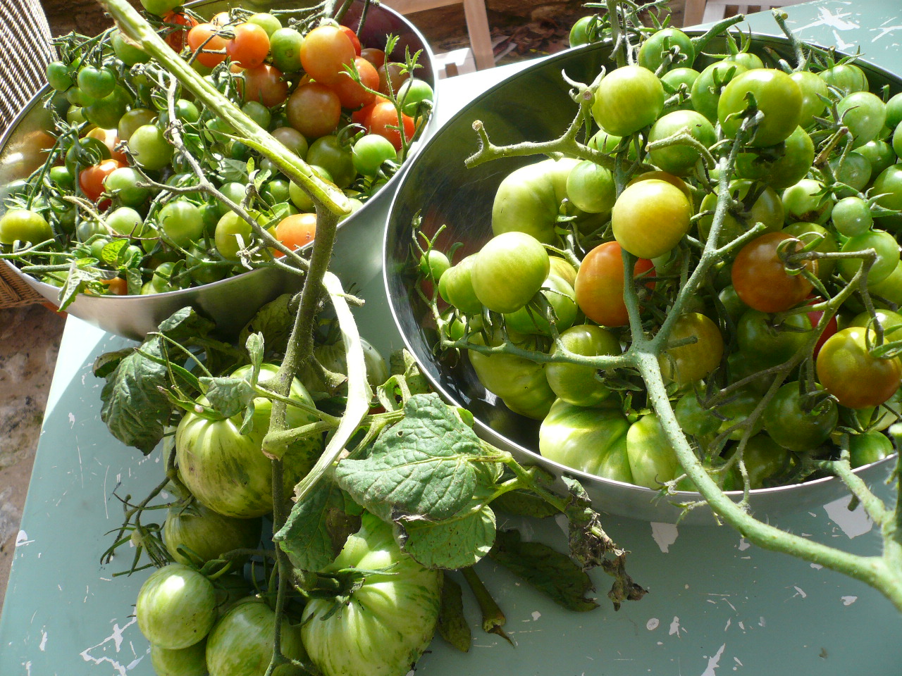 green toms