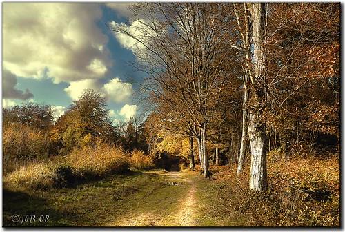 Forêt de Guînes -62-France-