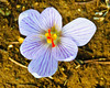 _dsc1817 copy (Miki Badt) Tags: flowers mtmeron