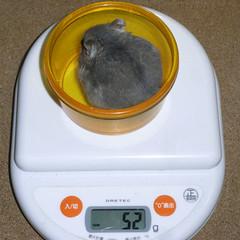 コー太は体重が増えました