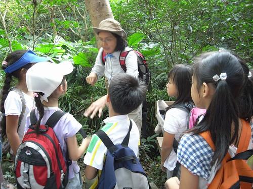 你拍攝的 25觀察攀木蜥蜴。