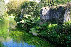 Ninfa Garden (Pandorea...) Tags: favoritegarden