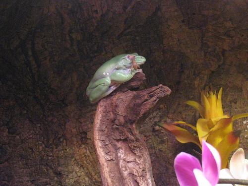 Frog Monterey Bay Aquarium