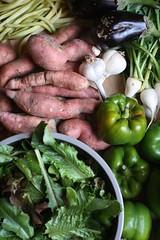Clagett Farm CSA 2008 Week 20