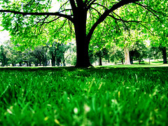 #54 November 26th (PaperTissue) Tags: sun tree green grass leaves canon project relax warm bright photos year relaxing down daily powershot trunk rest resting 365 lying shining lay g9
