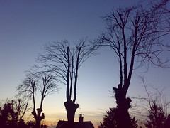 Earlswood Trees