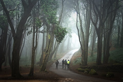 The realm of Trees (Lus C) Tags: wood morning light mist tree rain fog forest landscape dawn path sintra biosphere peninha d80