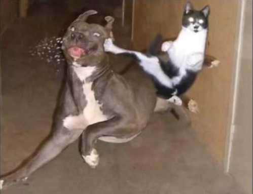 Ever seen a cat kicking a dog's ass?