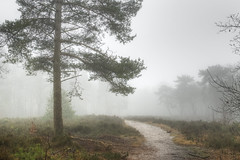 (Alex !) Tags: trees white mist tree fog forest cloudy heather foggy heath moor hdr damp 123nature d80