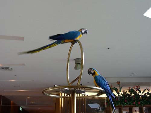 墾丁凱薩-鸚鵡