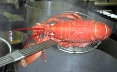Cooking a Lobster