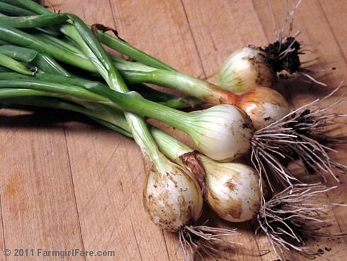 Freshly picked Texas 1015 Super Sweet spring onions  - Farmgirl Fare