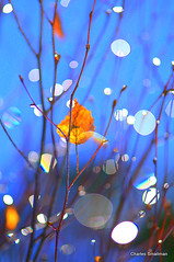 Rain drops (Charles Smallman) Tags: flowers portrait people glass speed reflections nikon holidays vespa sheep artistic cuba churches charles stainedglass isleofwight solent cowes windsurfer cowesweek kitesurfers ryde scooterrally smallman appley nikon300 nikon700 charlessmallman vacationsscooters charlessmallmansportfoliojanuary