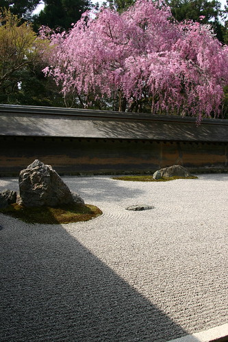 Ryoan-ji, featuring cherry blossoms
