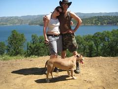 Happy Family (NetDiva) Tags: camping dog puppy steve pitbull bailey orion oldtruck 7yearsold diva shiner lakeberryessa fordf100 netdiva oznog april2008 68ford spanishflatresort
