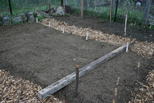 planted carrot bed