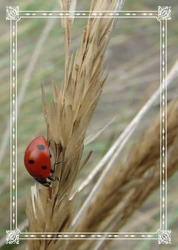 Ladybug Revisited