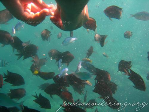 Coron, Palawan - Island Hopping 79