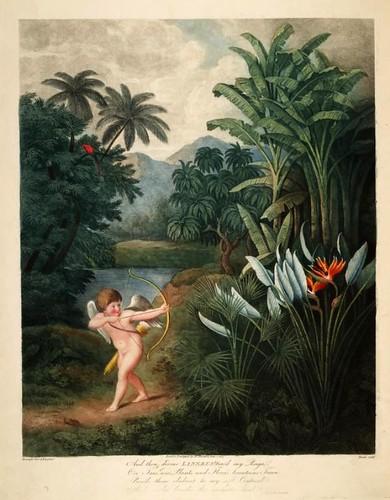 01b-Cupido inspirando amor a las plantas