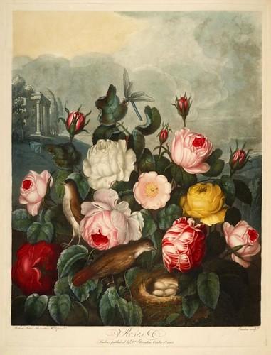 04a-Conjunto de rosas