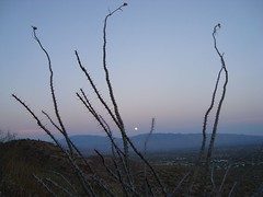 moonrise (azhiker_grrl) Tags: sunset arizona moon nature desert tucson hike fullmoon ocotillo sabinocanyon blackettsridge