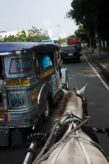 Scary...being in a donkey and that close to the traffic (crvillalva) Tags: random philippines donkey manila intramuros jeepney philippinevacation2008 may2008vacation