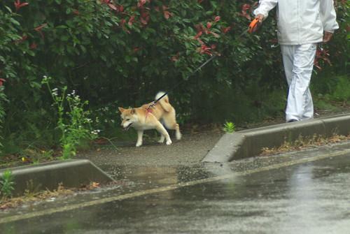 20080629014雨