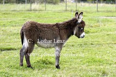 lz250804(78) (Lothar Lenz) Tags: deutschland esel 56812dohr