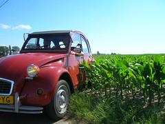 A dutch 2cv taking a shortcut (Stinoo) Tags: field citroën 2cv veld eend champ geit 2pk maïs deuche