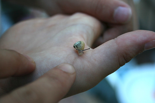 so klein und schon eine Schnecke