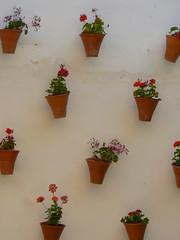 Jarrón (Aspirin Photo) Tags: españa flores andalucía spain patio andalusia giugno ferie spagna espanya siparte reinodeespaña crieleeroby viaggioinandalusia